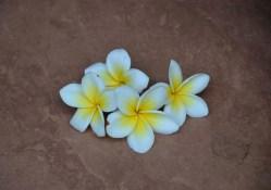 Flor de Bali