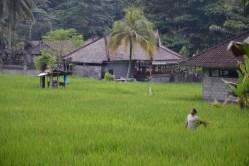 Tirtaganga